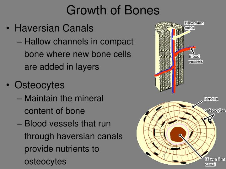 Growth of Bones