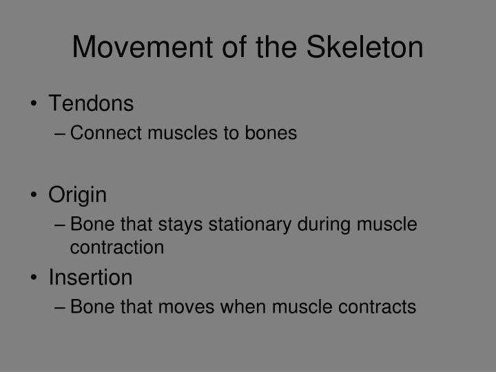 Movement of the Skeleton