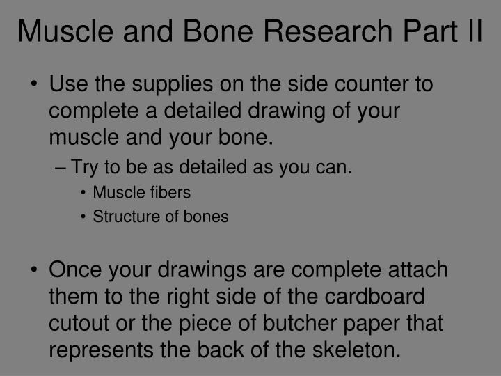 Muscle and Bone Research Part II