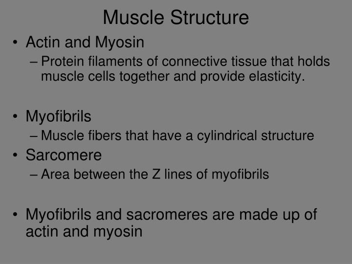 Muscle Structure
