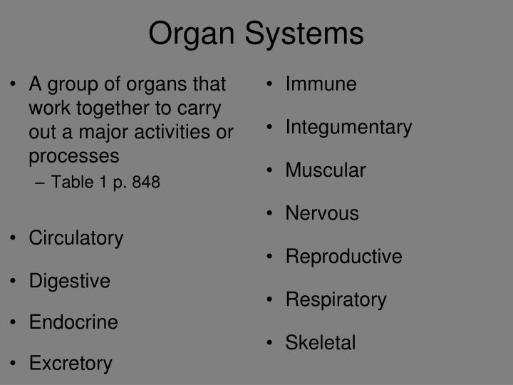 A group of organs that work together to carry out a major activities or processes