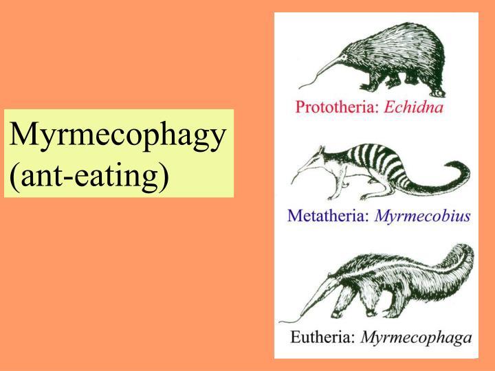 Myrmecophagy