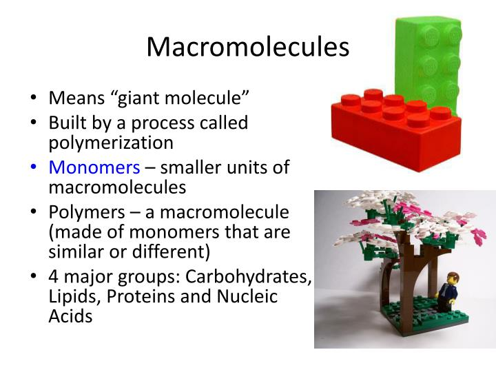 Four major macromolecules