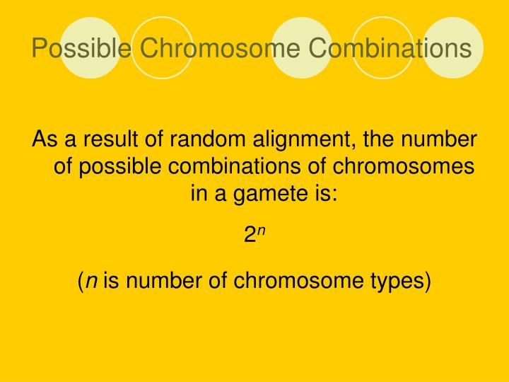 Possible Chromosome Combinations