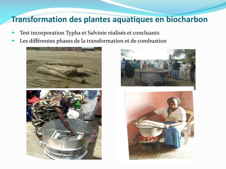 Transformation des plantes aquatiques en biocharbon