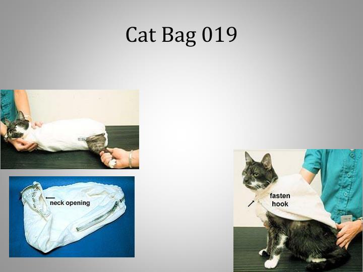 Cat Bag 019