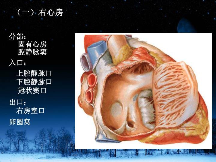 (一)右心房