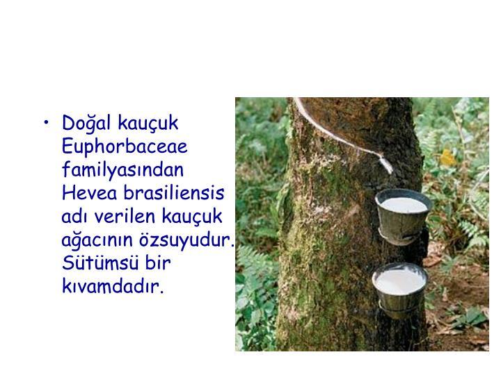 Doğal kauçuk Euphorbaceae familyasından Hevea brasiliensis adı verilen kauçuk ağacının özsuyudur. Sütümsü bir kıvamdadır.