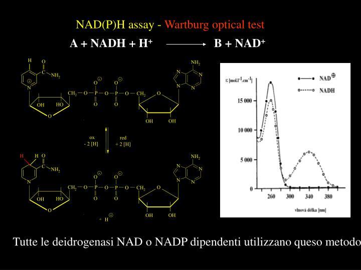 NAD(P)H assay -