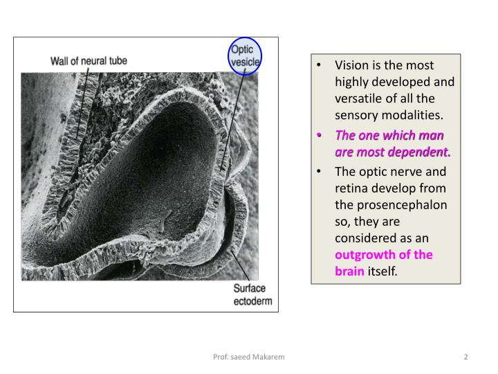 Vision is the most highly developed and versatile of all the sensory modalities.
