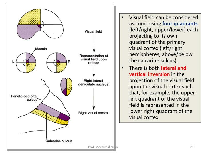 Visual field can be considered as comprising