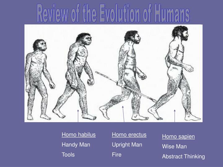 Review of the Evolution of Humans