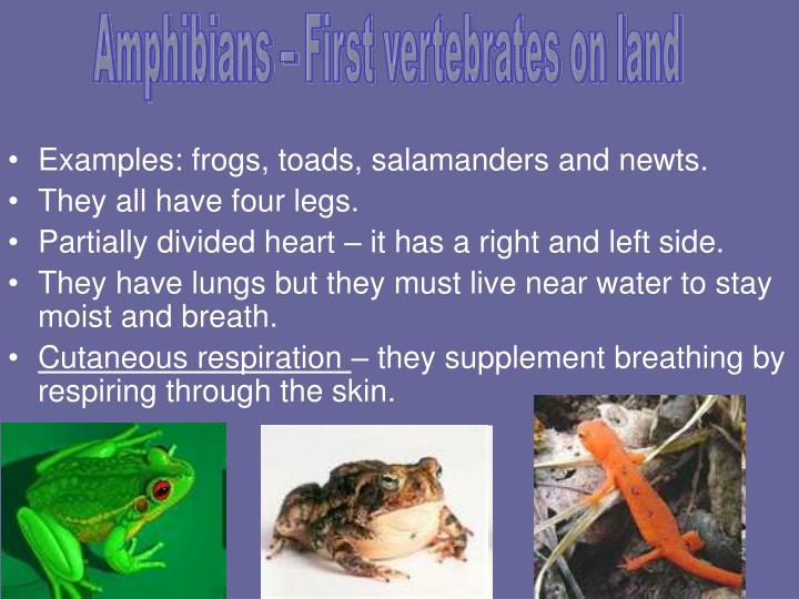 Amphibians – First vertebrates on land