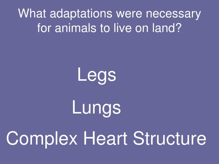 What adaptations were necessary for animals to live on land?