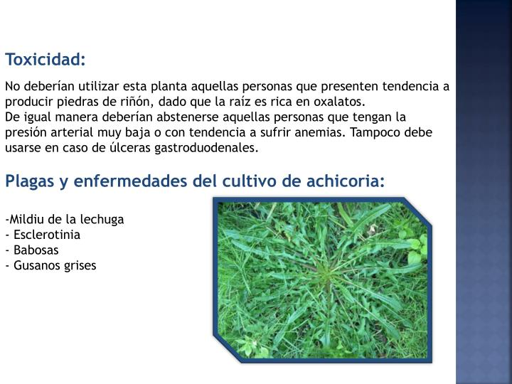 Toxicidad: