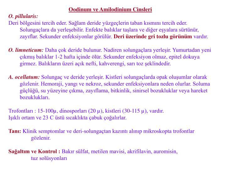 Oodinum ve Amilodinium Cinsleri