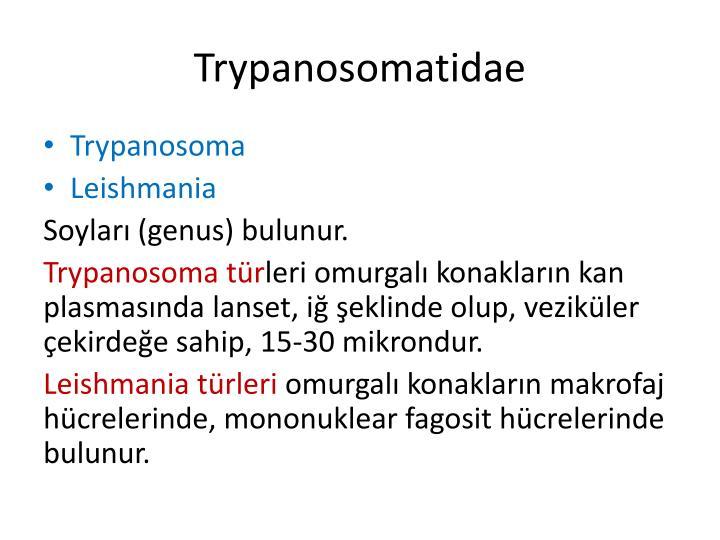 Trypanosomatidae