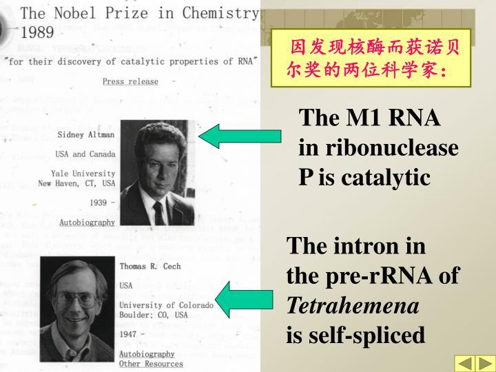 因发现核酶而获诺贝尔奖的两位科学家: