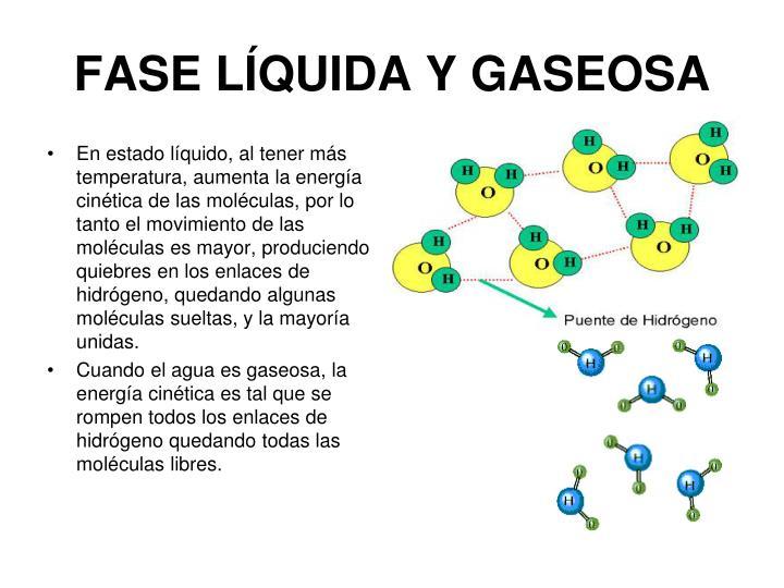 FASE LÍQUIDA Y GASEOSA