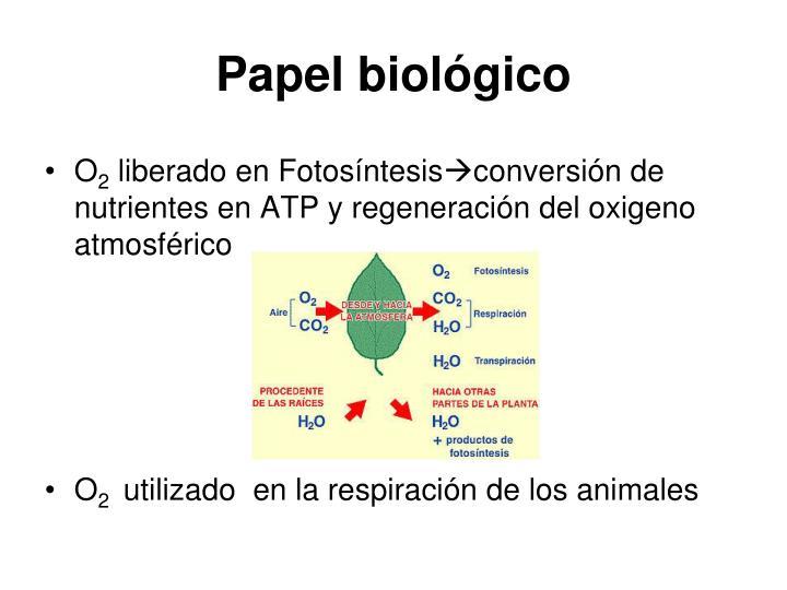 Papel biológico