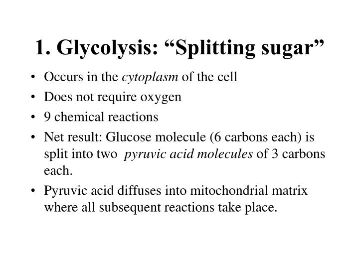 """1. Glycolysis: """"Splitting sugar"""""""