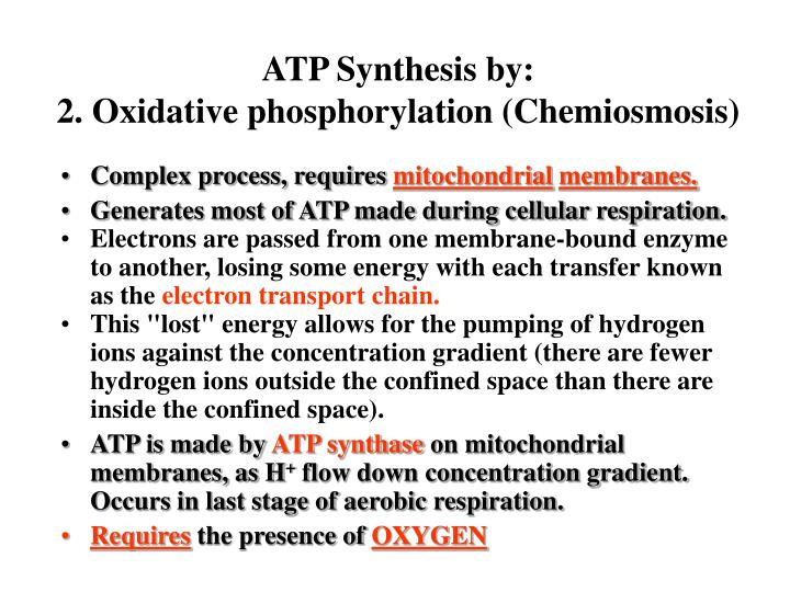 ATP Synthesis by: