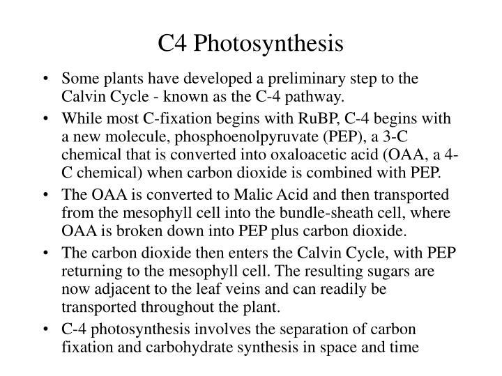 C4 Photosynthesis