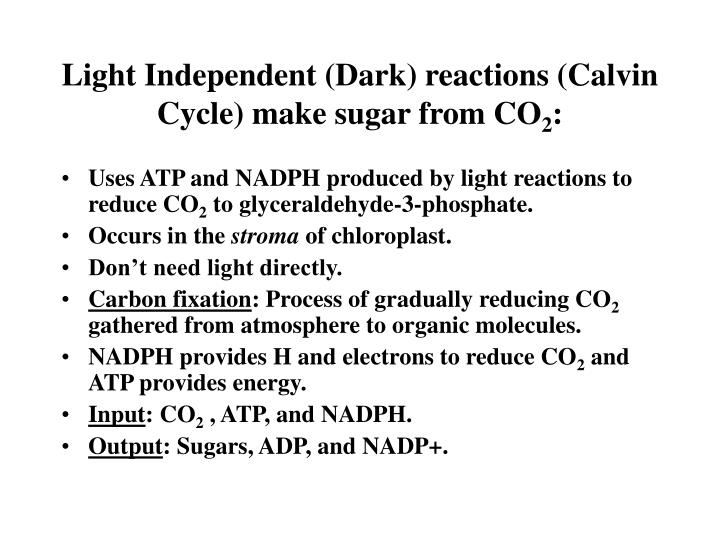 Light Independent (Dark) reactions (Calvin Cycle) make sugar from CO