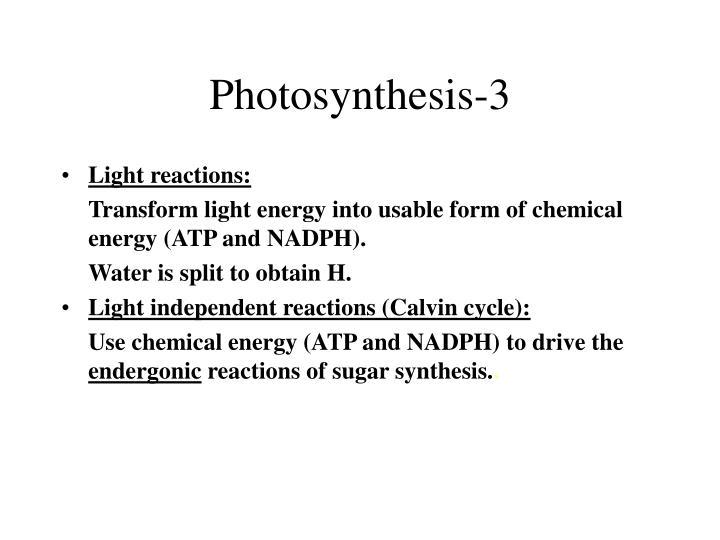Photosynthesis-3