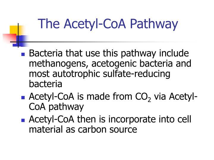 The Acetyl-CoA Pathway