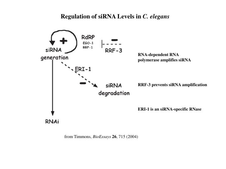 Regulation of siRNA Levels in