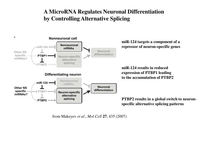 A MicroRNA Regulates Neuronal Differentiation
