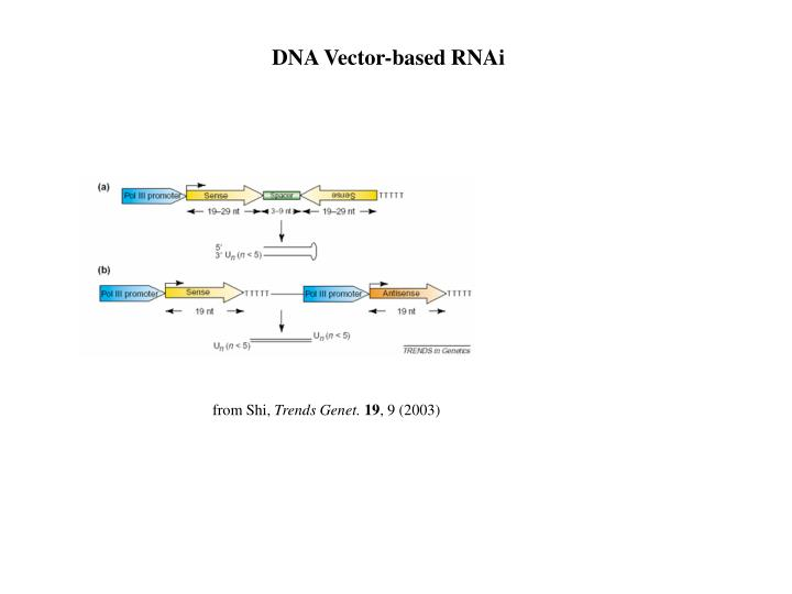 DNA Vector-based RNAi