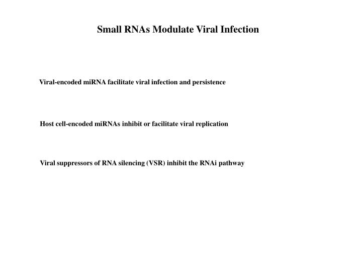 Small RNAs Modulate Viral Infection