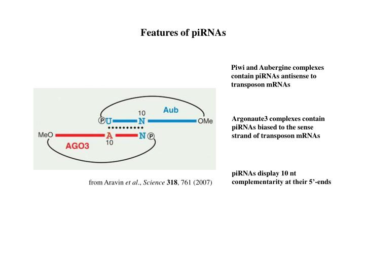 Features of piRNAs