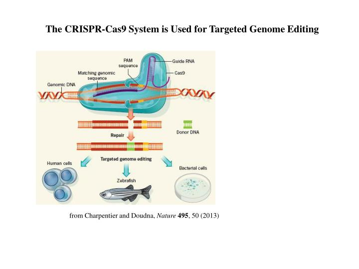 The CRISPR-Cas9 System is Used for Targeted Genome Editing