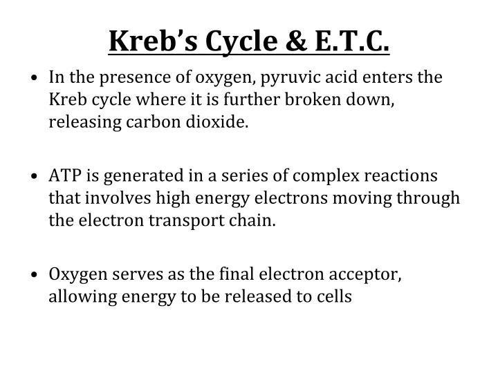 Kreb's Cycle & E.T.C.