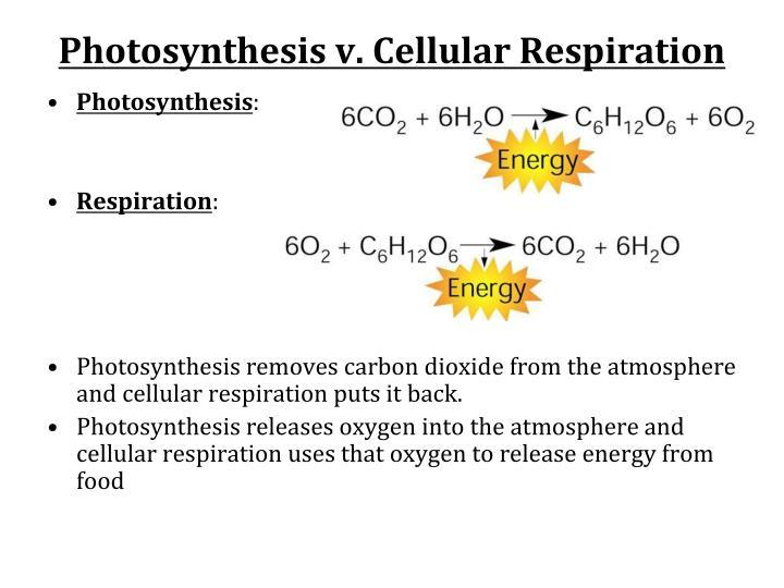 Photosynthesis v. Cellular Respiration
