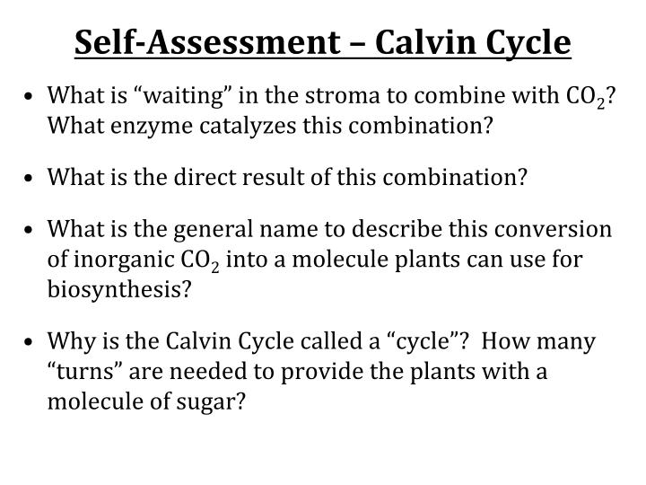 Self-Assessment – Calvin Cycle