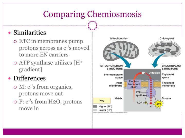 Comparing Chemiosmosis