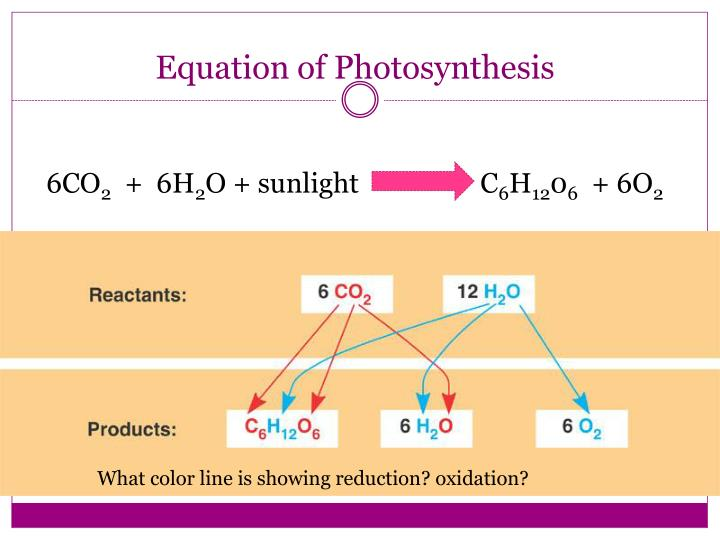 Equation of Photosynthesis