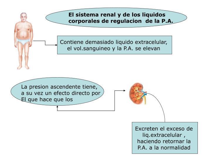 El sistema renal y de los liquidos