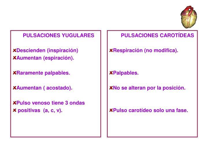 PULSACIONES YUGULARES