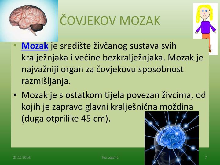 ČOVJEKOV MOZAK