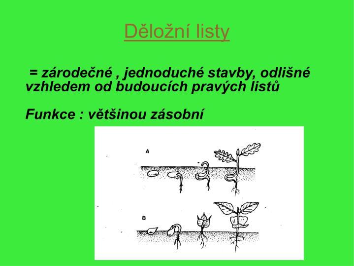 = zárodečné , jednoduché stavby, odlišné vzhledem od budoucích pravých listů