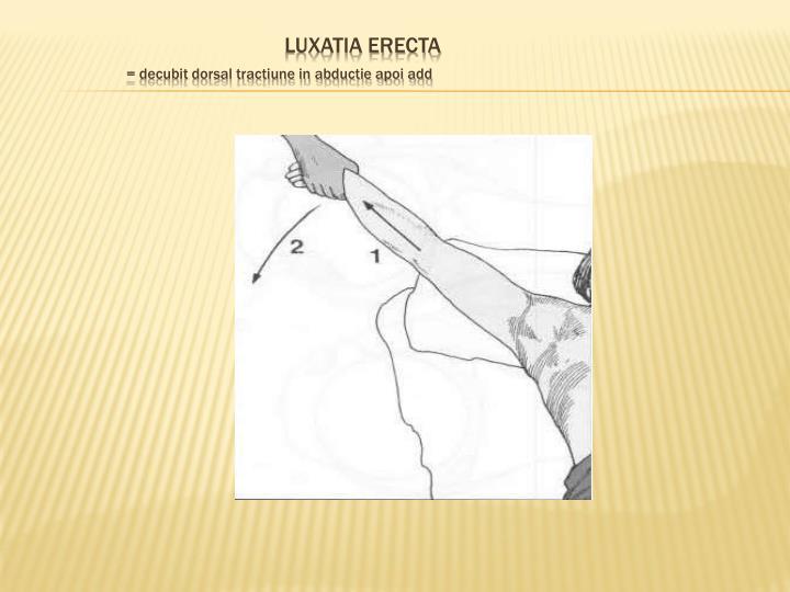 Luxatia erecta