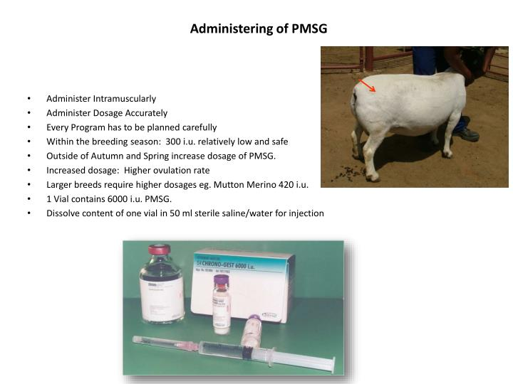 Administering of pmsg