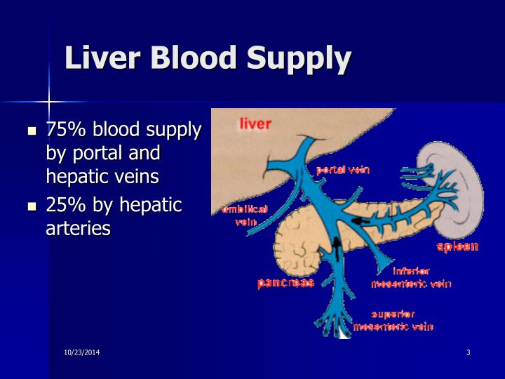 Liver Blood Supply