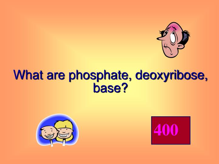 What are phosphate, deoxyribose, base?
