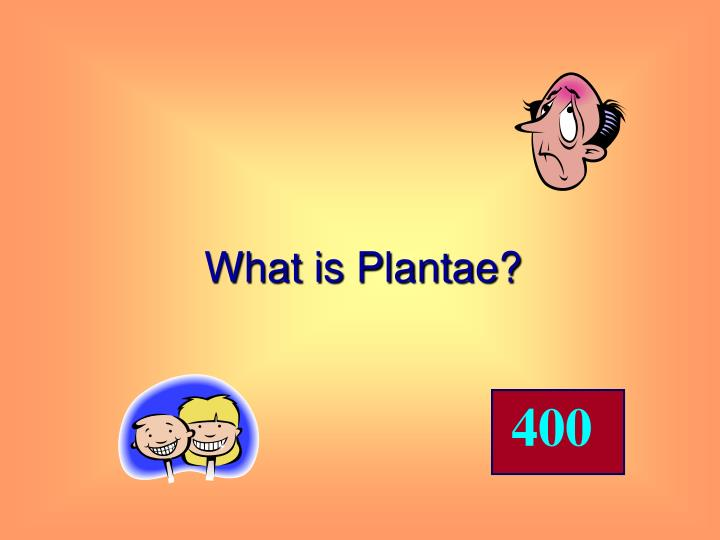 What is Plantae?